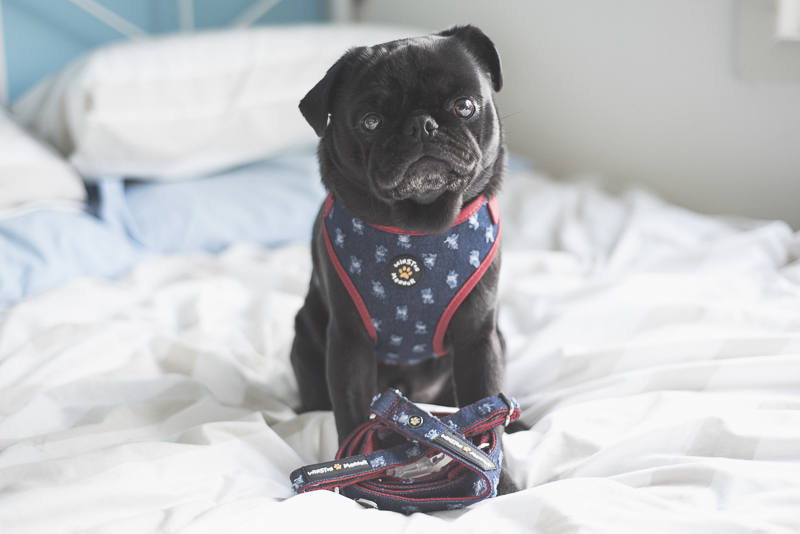 Why Should You Dress Up Your Dogs?